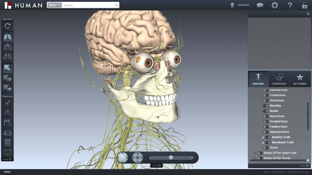 Nervous System with Selective Skeletal System